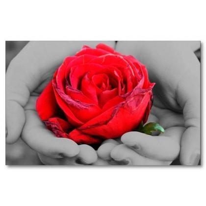 Αφίσα (μαύρο, λευκό, άσπρο, τριαντάφυλλο)